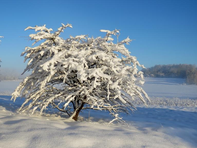 4. decembris - burvīga, sniegota ziemas diena.