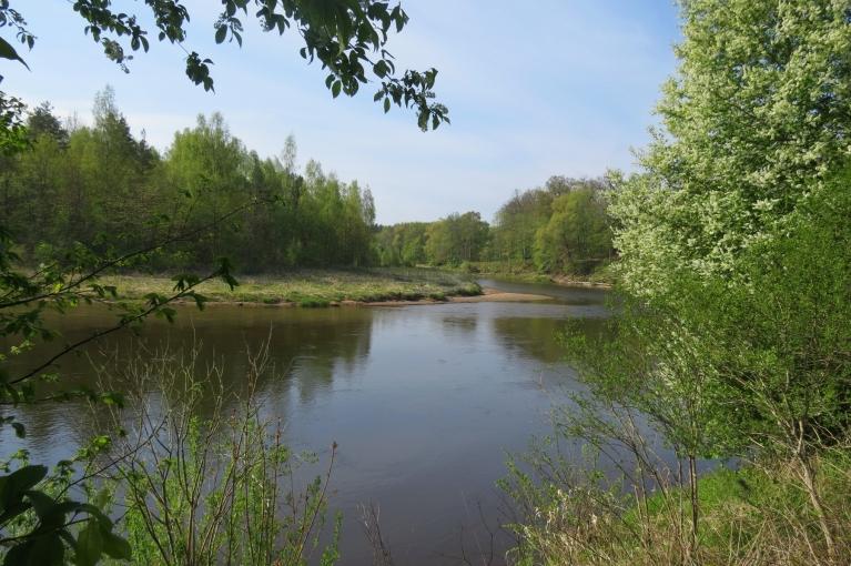 9. maija rīta puse Siguldā silta un saulaina, taisni kā radīta, lai papriecātos par upi un ievziediem.