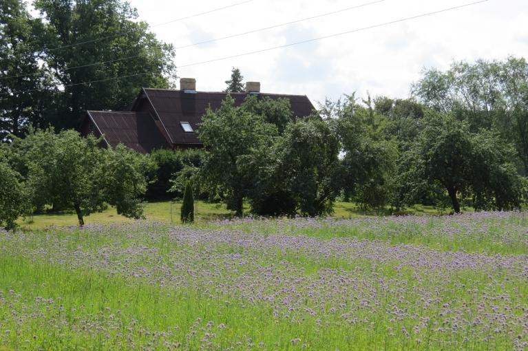 Skaisti izskatās ziliem ziediem lauks
