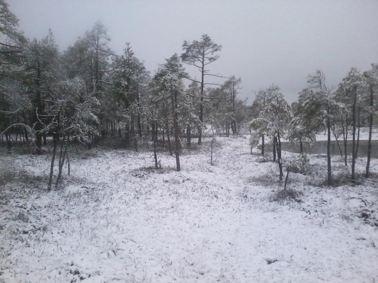 Purvā sasniguši apmēram 4 - 5 cm sniega, kas uzreiz arī strauji kusa.