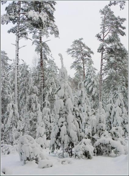 Rīgas apkārtne, 18.janvāris