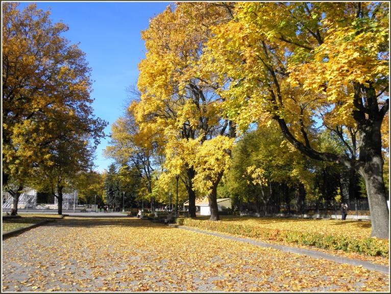 Autors: gubumākonis. Rīgas zelts (12.10.)