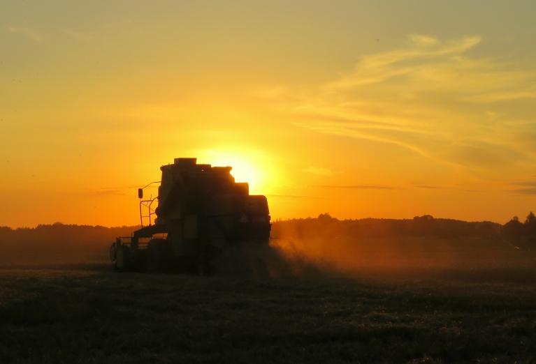 Kombaini labības laukos rosās līdz pat vēlam vakaram un vēl mazliet ilgāk...
