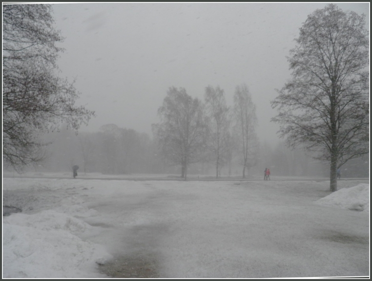 Autors: gubumākonis. Cīruļputenis Rīgā, 19.03.2012