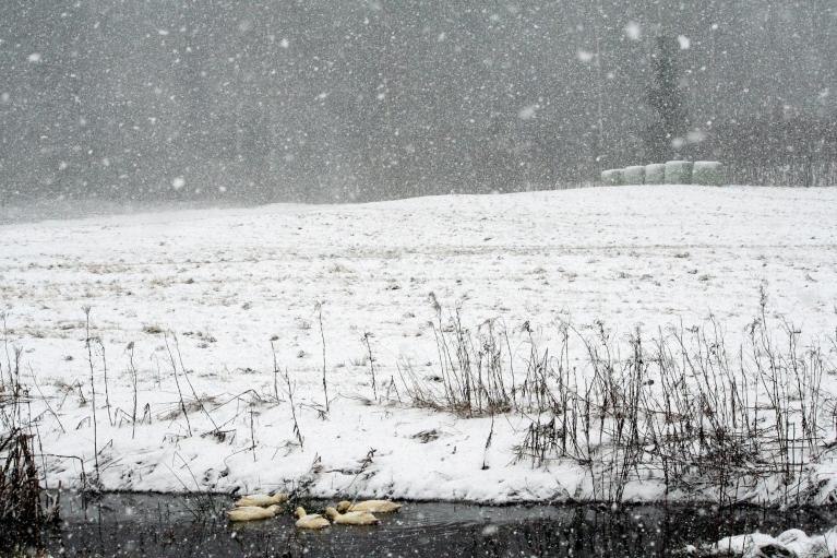 Autors: muntis. Piebalgā snieg, 9.01.