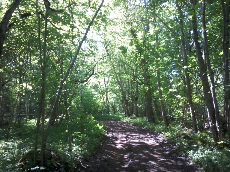 Lielāko daļu Abrukas klāj platlapju mežs, neparasti tik tālu ziemeļos.