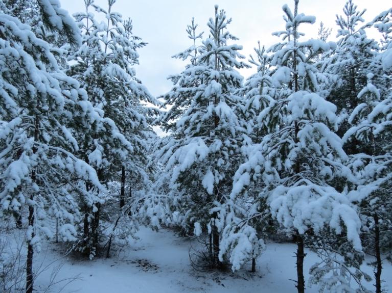 Autors: Ceļotājs. Lai gan 9.01. vakarpusē visai mēreni lija lietus, 10.01. rīts atausa ar aptuveni 5 - 7 cm sniega kārtu uz zemes.