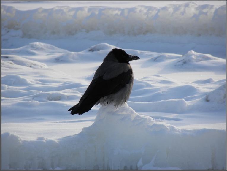 """Autors: gubumākonis. Līcis """"vāras"""" aukstumā.... 03.02.2012."""