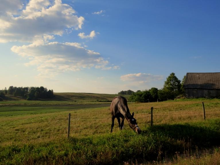 Silts vakars ar pāris mākoņu driskiņām, sausuma dēļ dažās ganībās sāk trūkt zāles.
