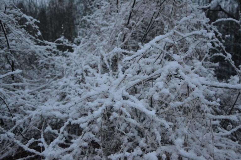 To apstiprina nākamās dienas rīts - papildus sarmas rotai klāt nācis arī 1 cm pūkaina sniega.