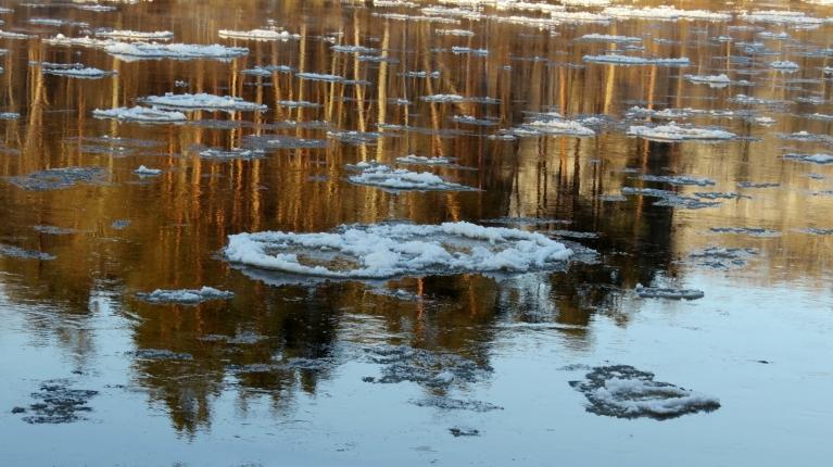Upē pa straumi lejup peld apaļas formas vižņi.
