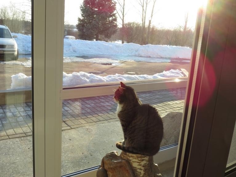 """18. marts - kaut arī laukā spīd saulīte, """"pagastmājas runcis"""" priekšroku dod sēdēšanai stikloto durvju iekšpusē."""
