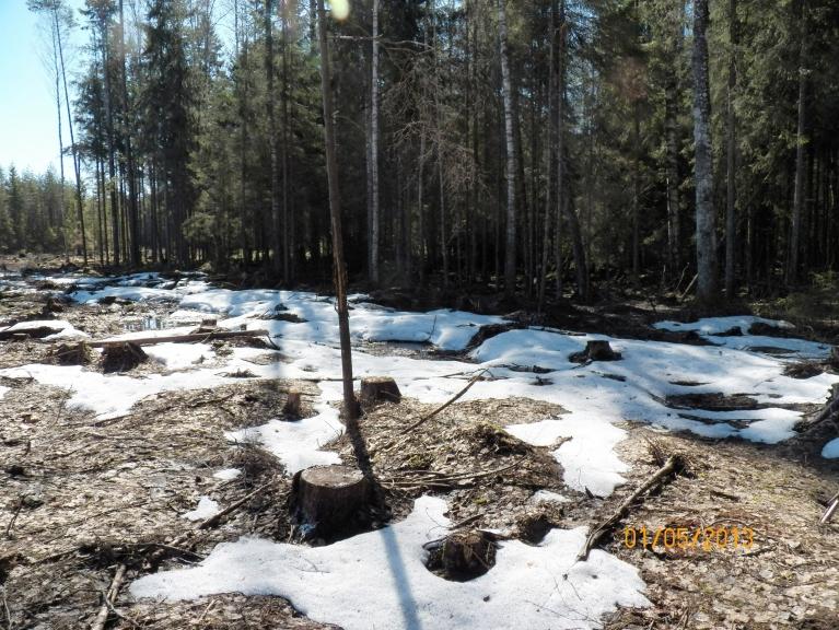 Dažos izcirtumos vēl sniegs...