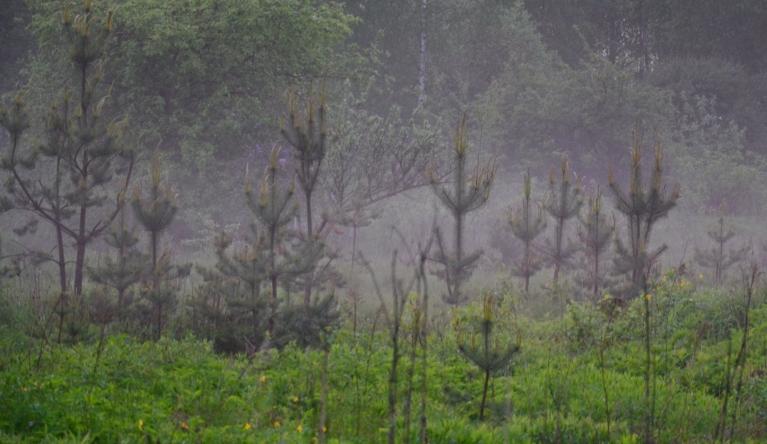 Pļavās ceļas dūmaka.