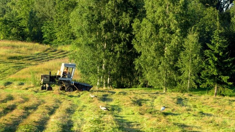 3. augusts, anticiklons pastiprinās, uzsākas siena pļauja bioloģiski augstvērtīgajās pļavās.