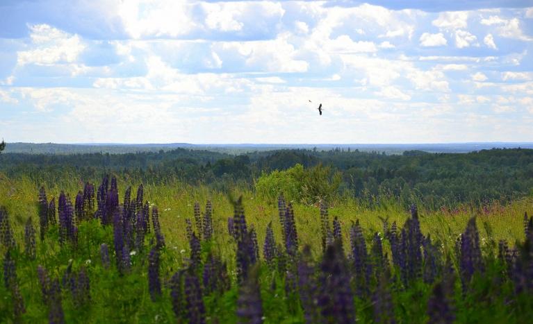 Vēl dažas dienas vēlāk, 16. jūnijā, dodos ceļojumā uz Ziemeļaustrumu Vidzemi. Šeit skats no Opekalna, uz kura atrodas visaugstāk Latvijā izvietotā baznīca.