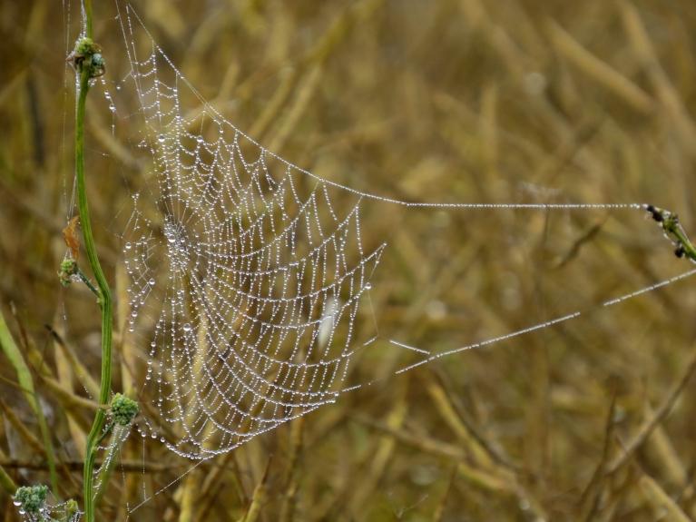 Rudens iezīme- lielais zirnekļu tīmekļu daudzums un rasas pilīšu rotaļas tajā.