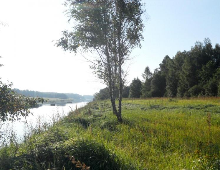 Pie upes viss zaļo, nekas neliecina par ilgo sausumu, vienīgi daudzi augi  liecina pat to, ka vasara iet uz otru galu:)