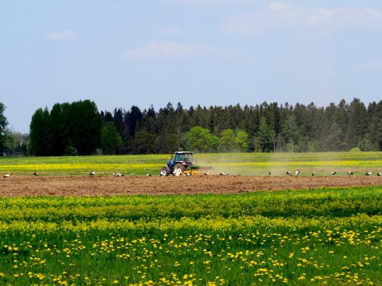 Lauki un ceļi put, stārķu  daudzums aiz traktoriem joprojām nenormāli liels.