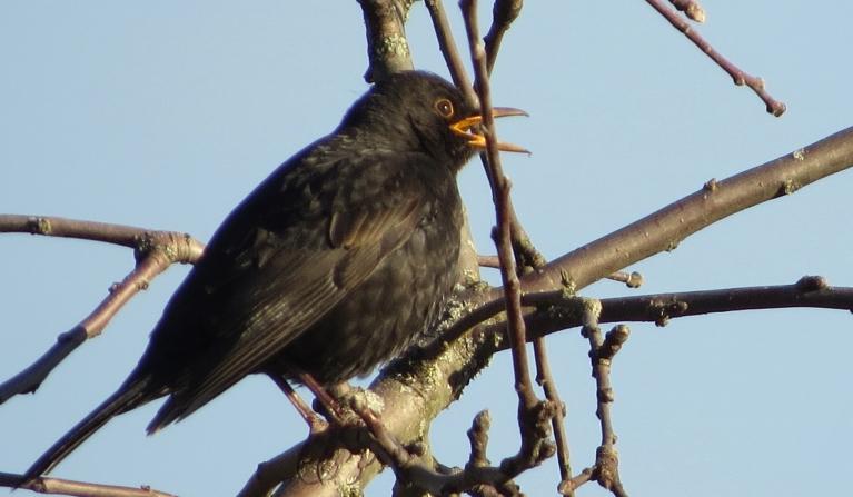Koku zaros dzied putni, purvā klaigā dzērves un pāri galvai migrē zosu bari.