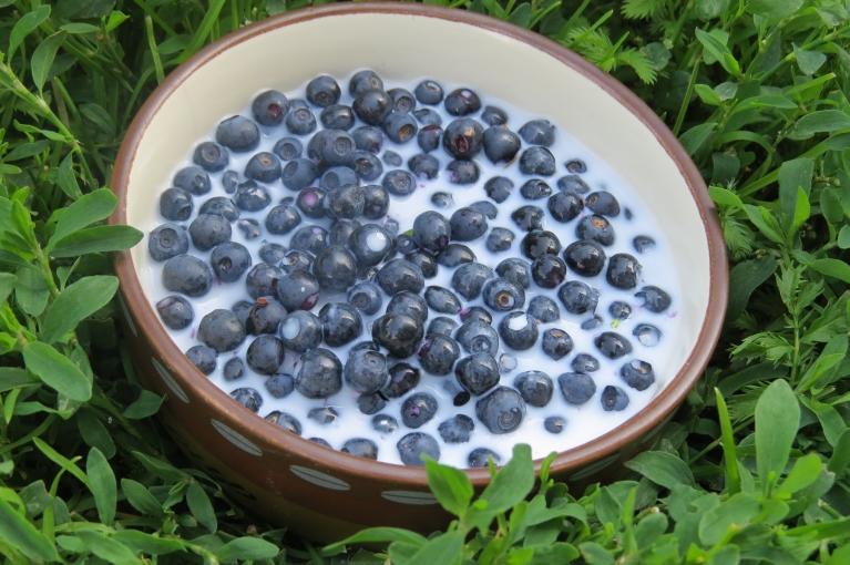 Mans vasaras mīļākai saldēdiens -mellenes ar pienu,  šogad gan mežā ogas maz un mazas.