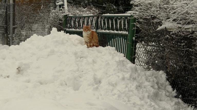 Pie vārtiem no satīrītā sniega jau sanāk neslikti kalniņi.