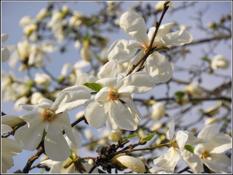 Aprīlis silts un mierīgs, pavasaris agrs...
