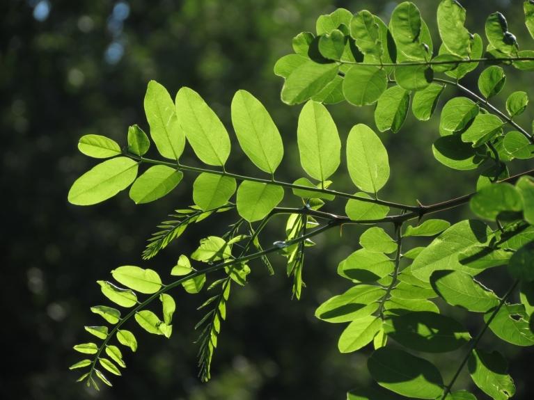 ... vērojām saules un vēl zaļo lapu, kā arī ēnu saspēli, ...