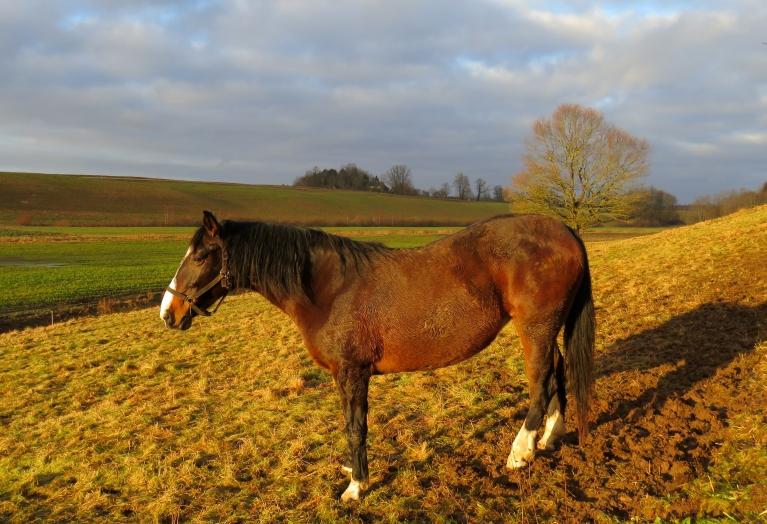 Dienas vidū uz mirkli iespīdējās saulīte, paspēju pat zirga ēnu nofotogrēfēt :).