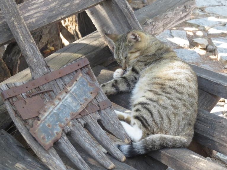 Turku kaķis pusdienas nomidzī.