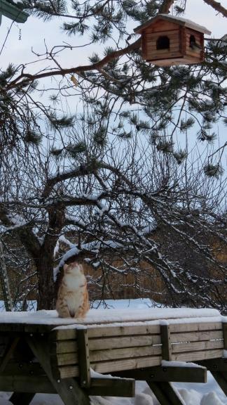 Rūdis kāri skatās uz putniņiem, bet būs vien jāiztiek ar pelītēm.
