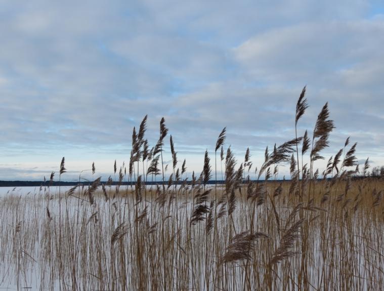 Autors: Ceļotājs. Būšnieku ezers Ventspils Z daļā, 11.02.