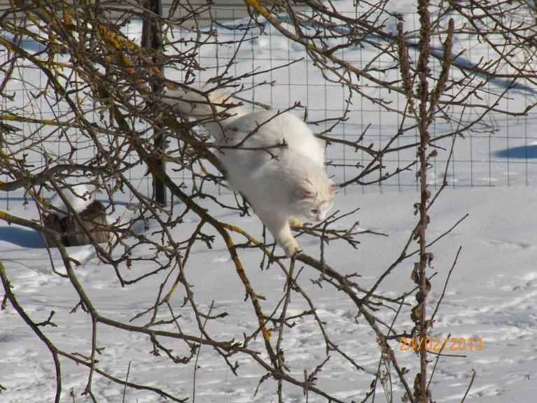 Viens tēlo baltu vāveri