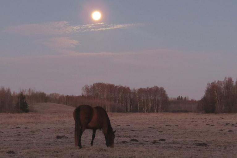 Mirklis pirms saullēkta - drīz rietēs pilnmēness.
