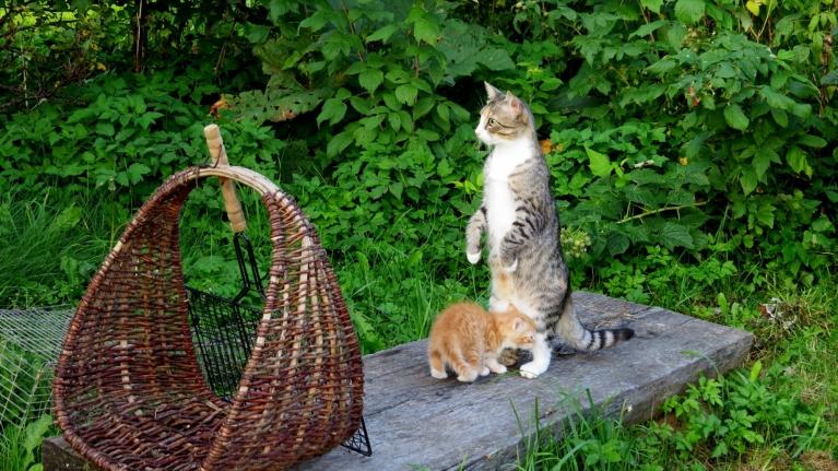 Kopā ar mani saulrietu vēroja kaķenīte Mīce un mazais Rūdis.