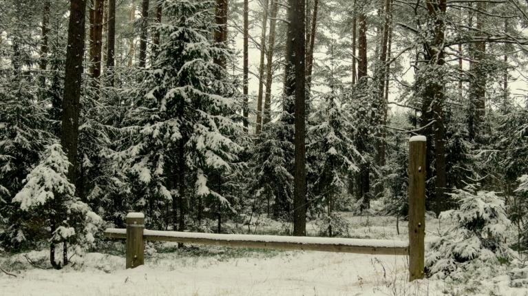Eglītēm ļoti piestāv baltās sniega sakšas :).