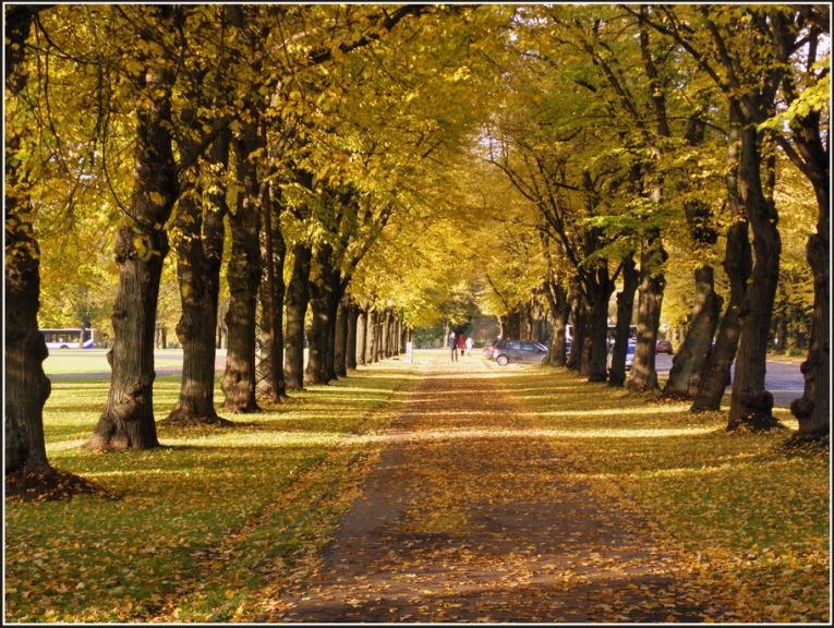 Oktobris pārsvara anticiklonu zīmē, neierasti mierīgs , skaists, krāsains zelta rudens...