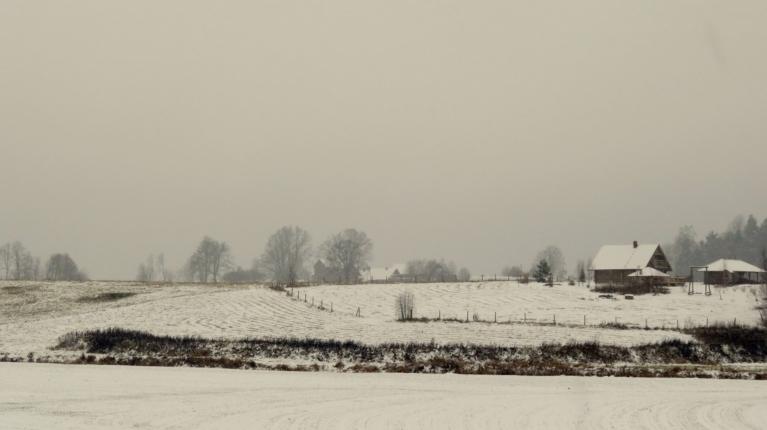 21. novembra rīts atausa baltā sniega segā tīts, sniega segas biezums ~4 cm.