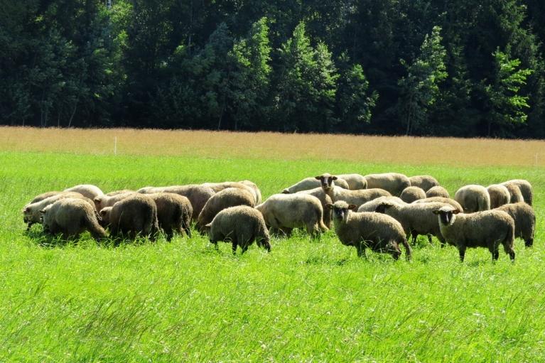 ... palika tikai aitas :).