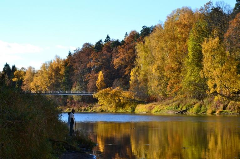 Pie Gaujas kājnieku tilta var baudīt arī zeltaino koku atspulgus ūdenī.