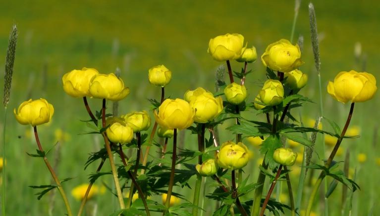 Upes malā zied purenes