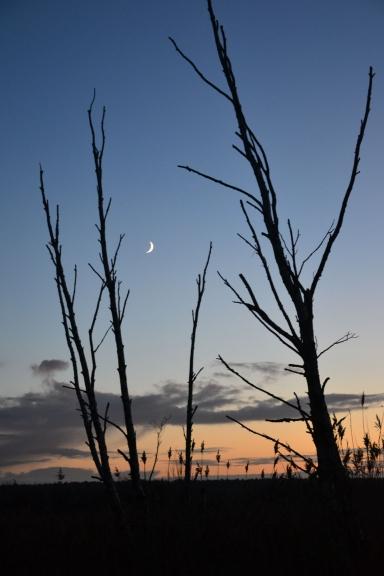 Pēc saulrieta ilgi nekļūst tumšs. Virs Spilves pļavām spīd spožs pusmēness.