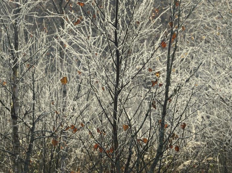 Pēdējas oktobra dienas rīts- auksts un sarmots.
