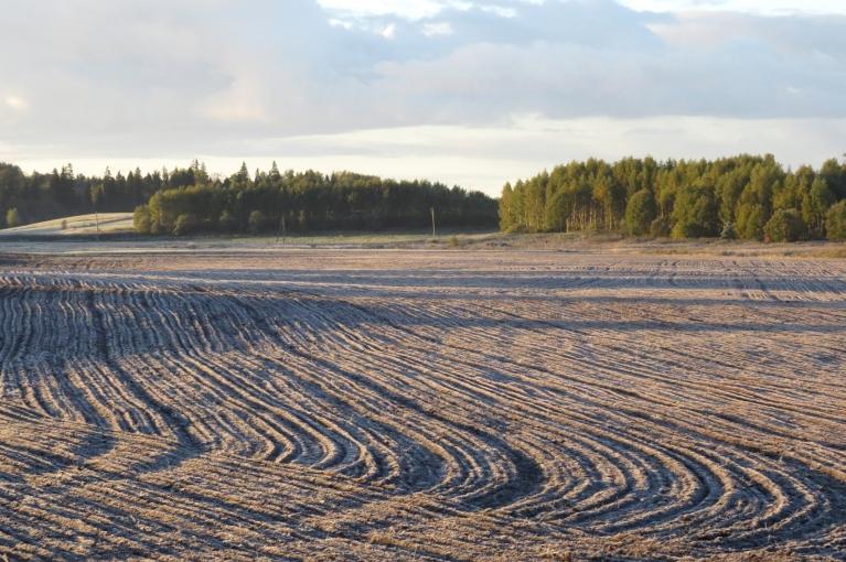 26. septembris - pirmās lielās rudens salnas.