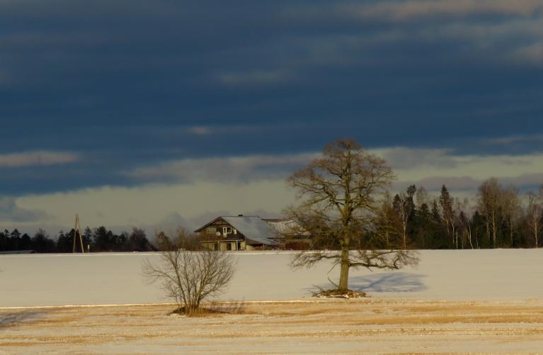 Bet dabas mātei citi plāni. Pēc 5. decembra atkušņa 6. decembrī sniega sega jau nedaudz saplakusi.