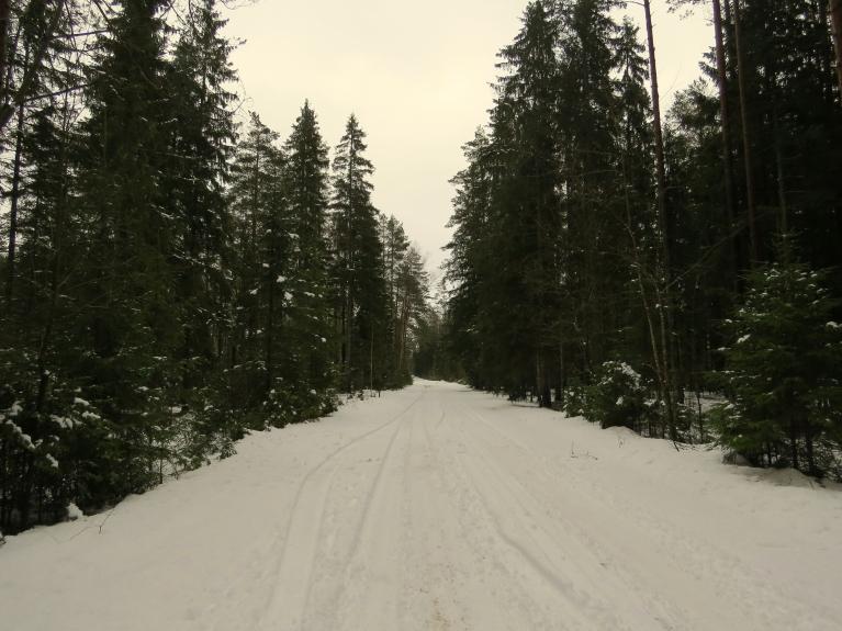 Neskatoties uz to, ka t visu dienu uzturas grādrāža pozitīvajā pusē, sniedziņš mežā nesteidz kust.