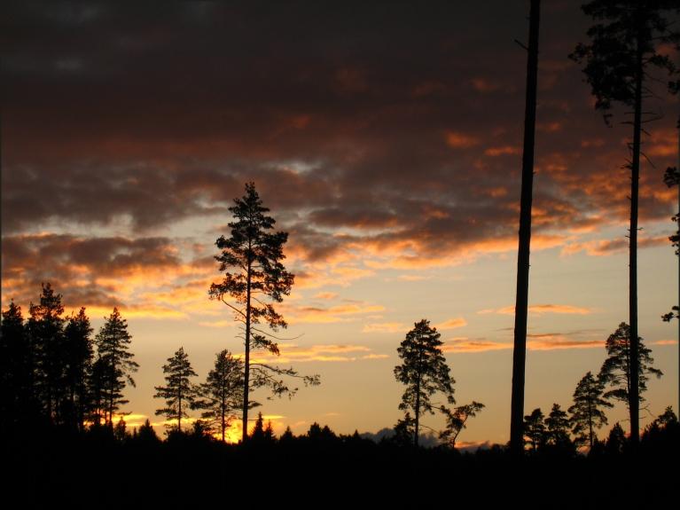 Autors: ilga123. Skaists saulriets jūlija sākumā, 01.07.. Vairāk foto var skatīt ŠEIT.