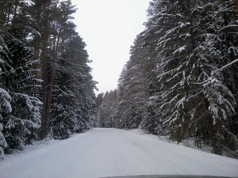Meža ceļi Ziemeļvidzemē.