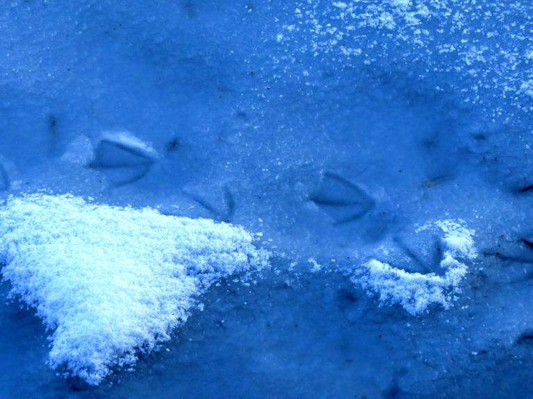 Dīķa malās vēl saglabājies ledus un vakar uzsnigusī plānā sniega kārtiņa.