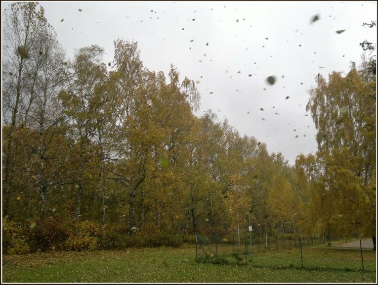 Autors: gubumākonis. Lapu vētra Rīgā, 18.10.